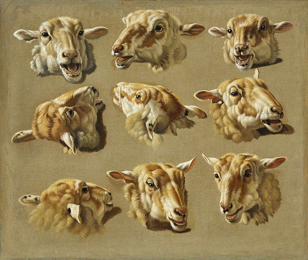 Jacques Raymond Brascassat sheep heads sheep head – James Bauerle – Danish fine art